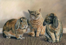 Rabbits and Cat
