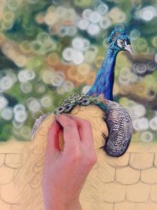 Peacock Progress 8