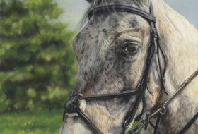 Murphy Horse Portrait