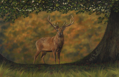 The Autumn Stag