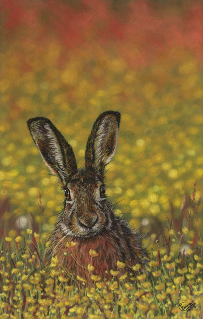 'Bathing in Buttercups' Limited Edition Giclee Print featturing a brown hare. Original Art by Northern Irish artist Emma Colbert.