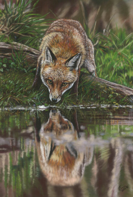 'Pond Pause' Limited Edition Giclee Print featturing a fox at a pond. Original Art by Northern Irish artist Emma Colbert.