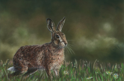 'Summer Meadow' Limited Edition Giclee Print featturing a brown hare. Original Art by Northern Irish artist Emma Colbert.