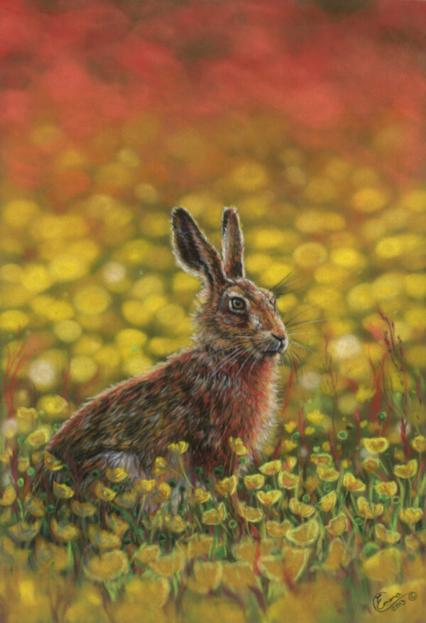 'Blooming Buttercups' Limited Edition Giclee Print featturing a brown hare. Original Art by Northern Irish artist Emma Colbert.