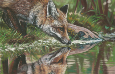 'Water's Edge' Limited Edition Giclee Print featturing a fox at a pond. Original Art by Northern Irish artist Emma Colbert.