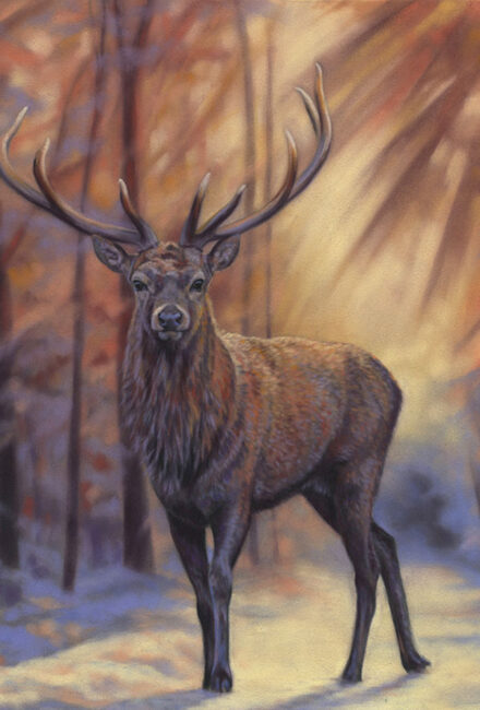 'Brave Hart' Limited Edition Giclee Print featturing a red deer in Gosford Park. Original Art by Northern Irish artist Emma Colbert.