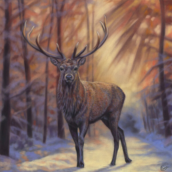 'Brave Hart' Limited Edition Giclee Print featturing a red deer in Gosford Park. Original Art by Northern Irish artist Emma Colbert.