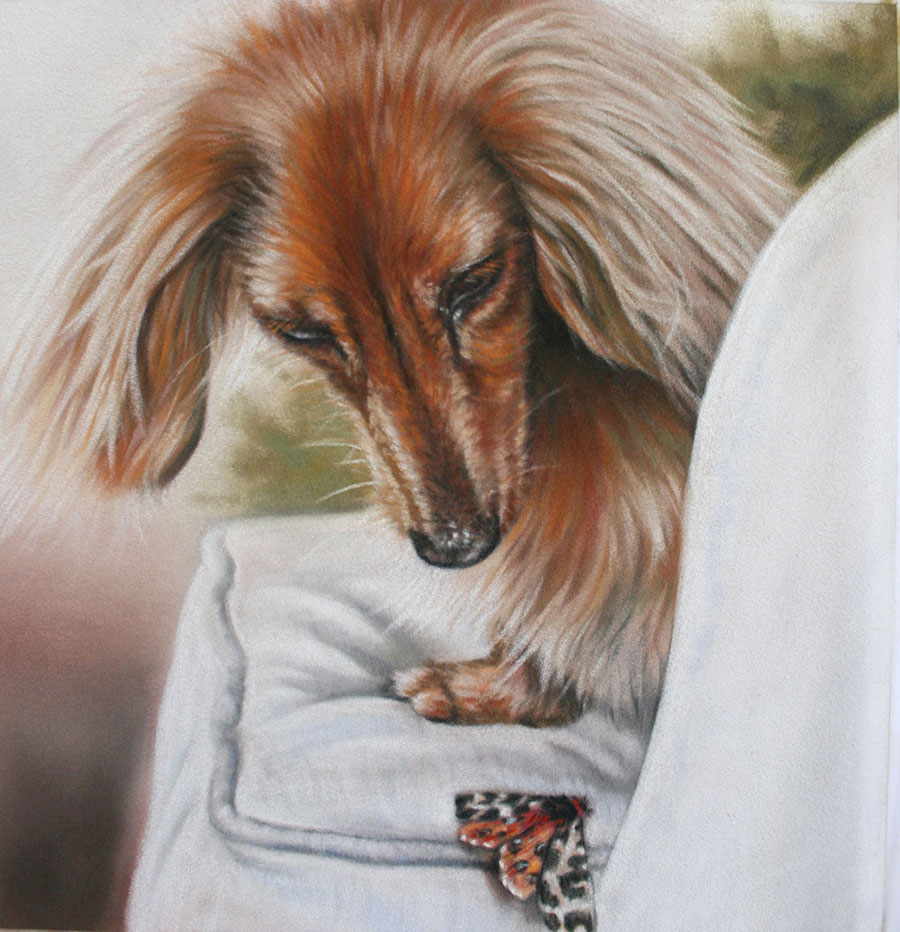 'Curiousity' Limited Edition Giclee Print featuring a dachshund and a moth. Original Art by Northern Irish artist Emma Colbert.