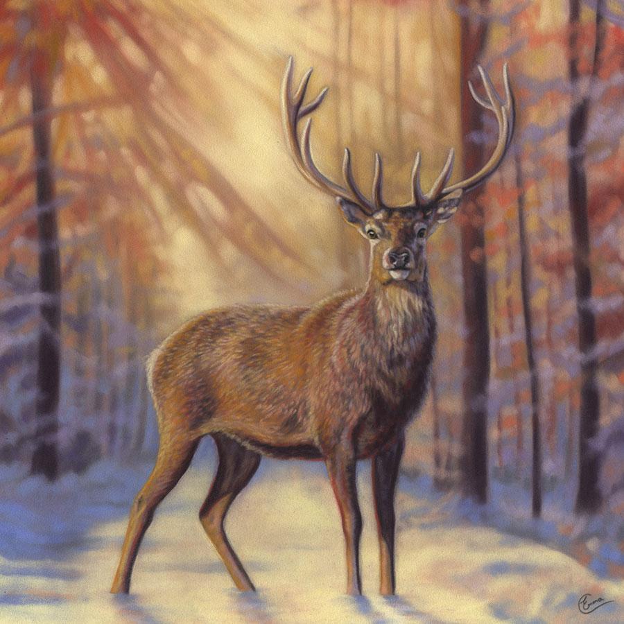 Wildlife Portraits Portfolio