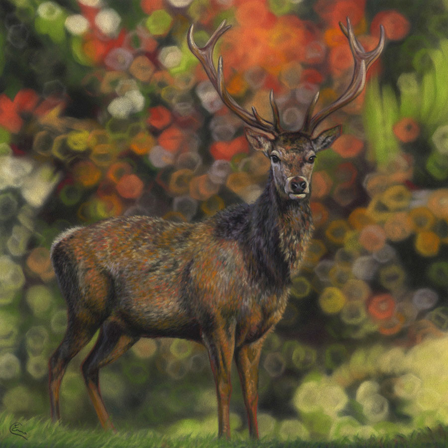 'Heart to Hart' Limited Edition Giclee Print featturing a red deer in Gosford Park. Original Art by Northern Irish artist Emma Colbert.