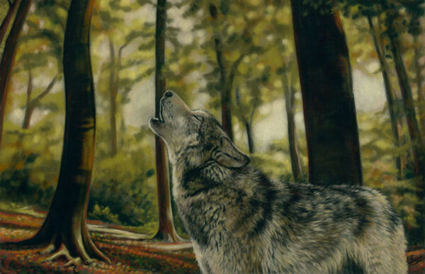 'Howlin' Wolf' Limited Edition Giclee Print featturing a wolf in the forest. Original Art by Northern Irish artist Emma Colbert.
