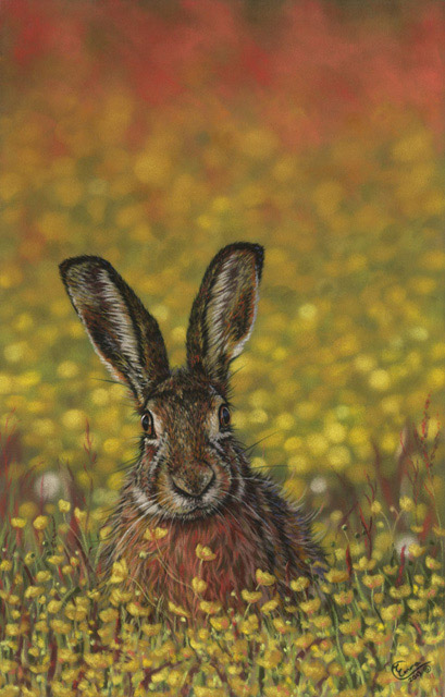 Wildlife Portraits Portfolio Emma Colbert Art Northern