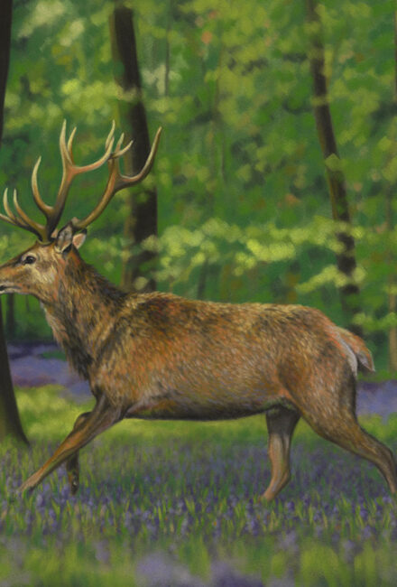 'Hart of the Forest' Limited Edition Giclee Print featturing a red deer in Gosford Park. Original Art by Northern Irish artist Emma Colbert.