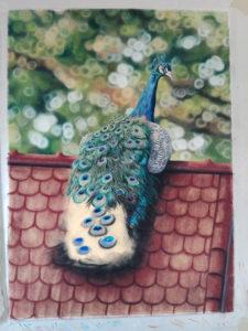 Peacock Progress 16