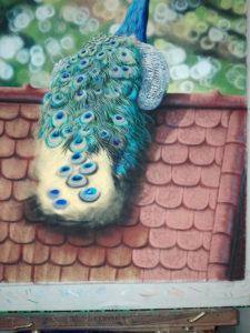 Peacock Progress 18