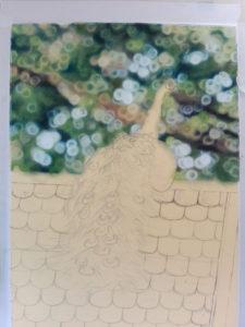 Peacock Progress 4