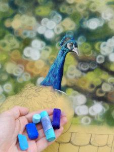Peacock Progress 6
