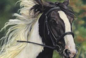 Ellie Horse Portrait