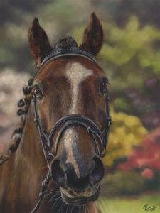 Teddy Horse Portrait